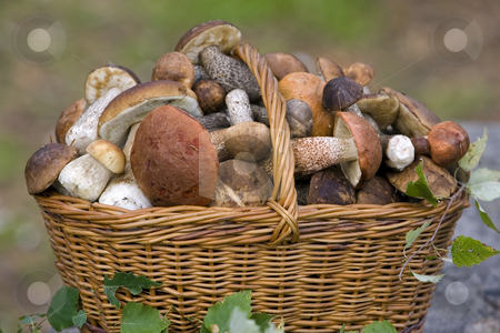 cutcaster-photo-100146269-basket-full-of-fresh-autumn-mushrooms